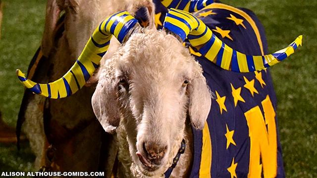 Goat-640